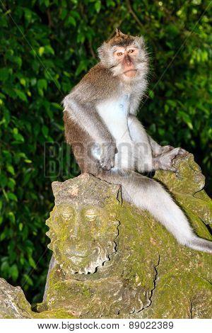 Monkey On A Statue