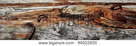 Drift Wood