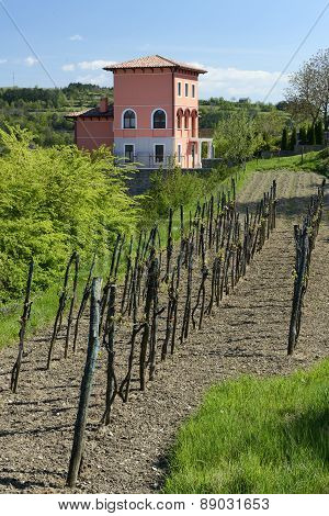 Rural House With A Small Vineyard