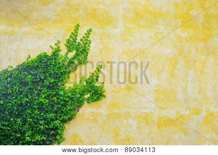 Ivy On A Yellow Wall