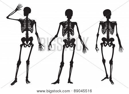 Three Skeleton