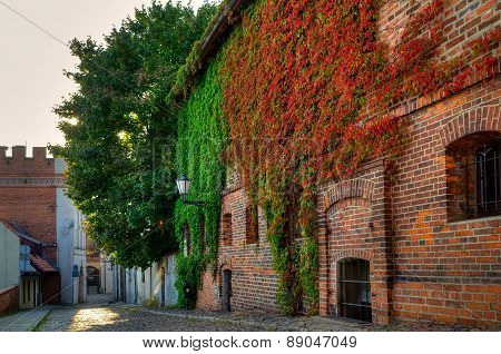 Gothic building overgrown with ivy old town in Torun, Poland.