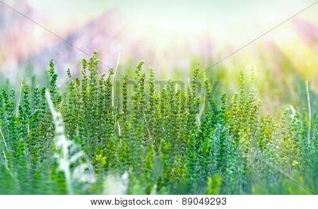 Green flower illuminated with sun rays