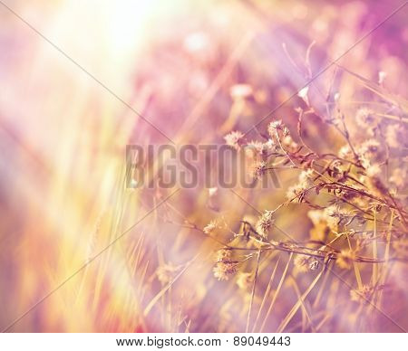 Dry flowers in meadow (dryplants)