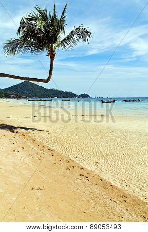 Isle  Asia In  Kho Phangan Thailand   Sea