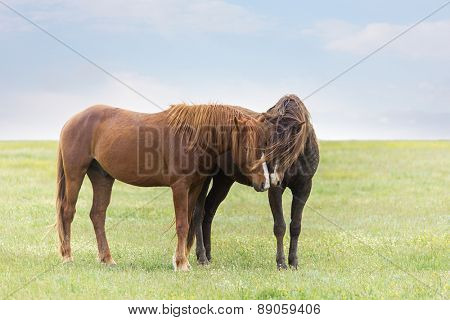 Horse in field on green grass