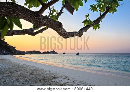 on the beach at Similan islands in Thailand focus on tree