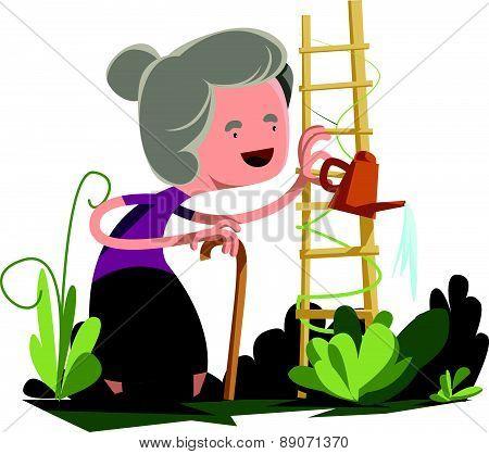 Old granny watering garden vector illustration cartoon character