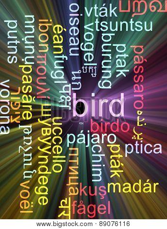 Background concept wordcloud multilanguage international many language illustration of bird glowing light