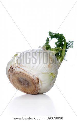 Studio shot of fennel root