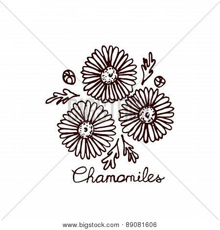Handsketched bouquet of chamomiles