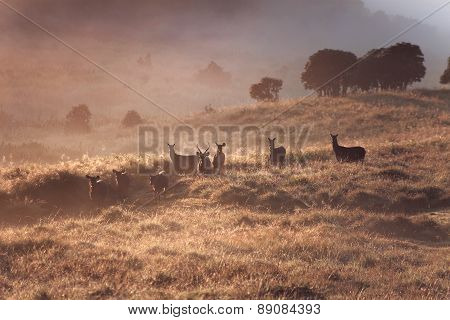 Dreamy landscape with wild deers