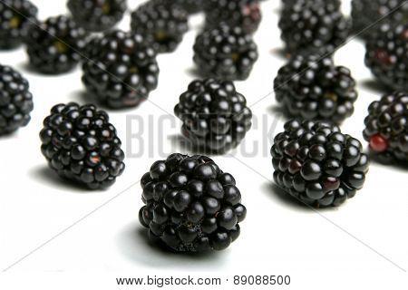 Blackberries on white background - studio shot