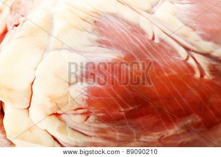 Raw animal heart close up