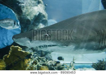 Shark in an aquarium