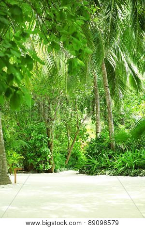 Beautiful green trees in resort