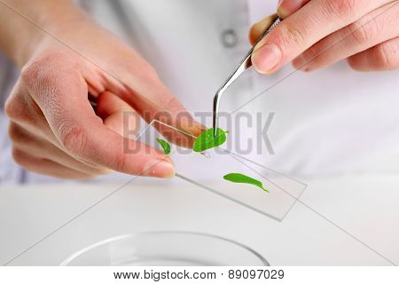 Woman examining green plant in laboratory, close up