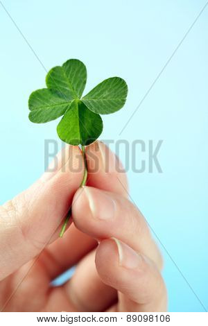 Female hand holding green clover leaf on sky background