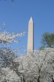 pic of obelisk  - The Washington Memorial was built to commemorate George Washington (The first USA president) and it is the biggest obelisk and the world largest stone structure. ** Note: Visible grain at 100%, best at smaller sizes - JPG