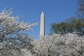 foto of obelisk  - The Washington Memorial was built to commemorate George Washington (The first USA president) and it is the biggest obelisk and the world largest stone structure. ** Note: Visible grain at 100%, best at smaller sizes - JPG