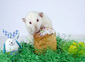 picture of rats  - Cute little decorative rat near the Easter cake.
