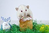 stock photo of rats  - Cute little decorative rat near the Easter cake - JPG
