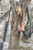 pic of cap gun  - Killed in hunting fox on the tree with a gun - JPG