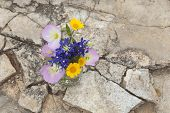 picture of masonic  - A bouquet of Texas wildflowers from the Texas Hill Country in a mason jar shot from overhead on stone ground - JPG