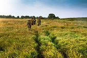 stock photo of tall grass  - Group of people going into the distance on a green field with tall grass during sunrise - JPG