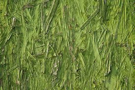 foto of errat  - Green colored unique and uniform textured abstract background - JPG