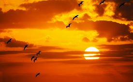 stock photo of flock seagulls  - flock of seagulls flying in the sun at sunset