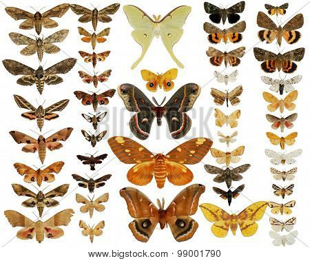 Butterfly Moth Collection