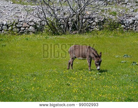 Field flowers and a donkey