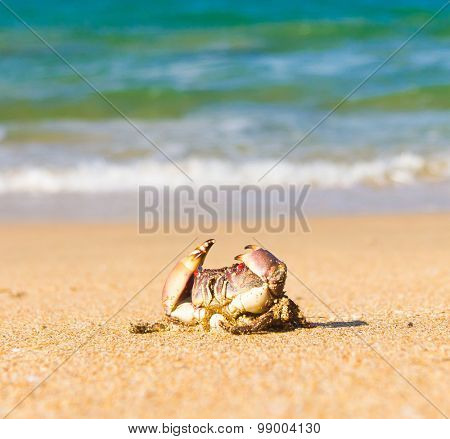 Funny Crab On the Shore