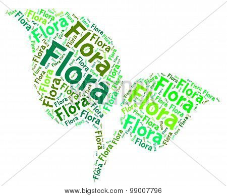 Flora Word Means Plant Life And Areas
