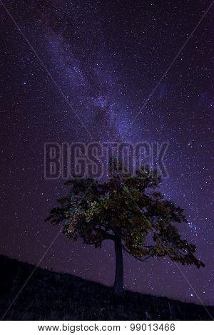 The Milky Way over the alone tree silhouette. Carpathian, Ukraine, Europe.