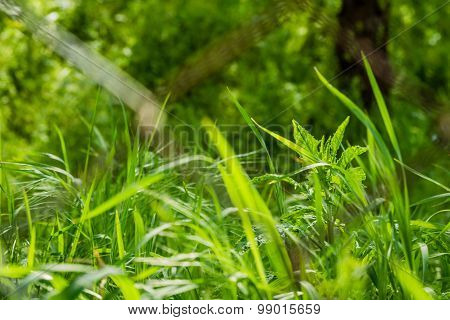Green Grass Behind Barbed Wire