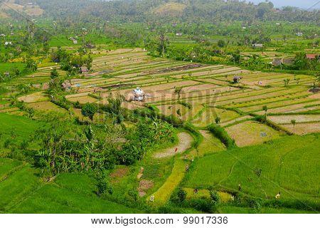 Teraced Rice Fields In Southeast Asia