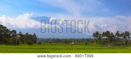 Rice Fields And Coconut Trees In Southeast Asia