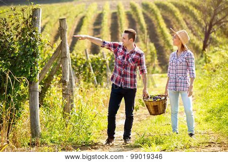 Young couple walking in huge vineyard with full wicker basket