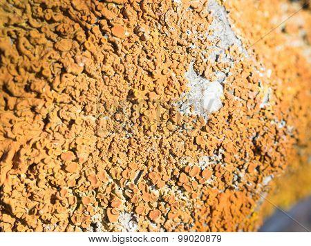 Lichens Marine Rocks