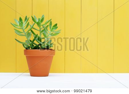 Green Plant On Yellow Wooden Background