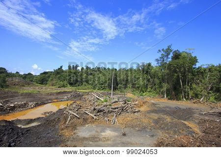 Deforestation environmental damage destruction of rain forest