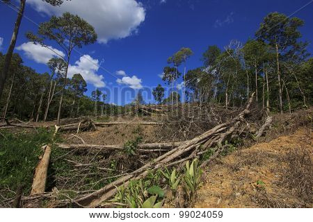 Deforestation environmental damage rainforest jungle being destroyed to make way for oil palm plantations