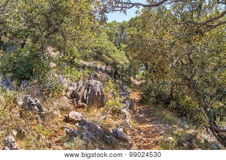 A Narrow Foot Path Through The Mediterranean Bushes And Trees And Rocky Landscape