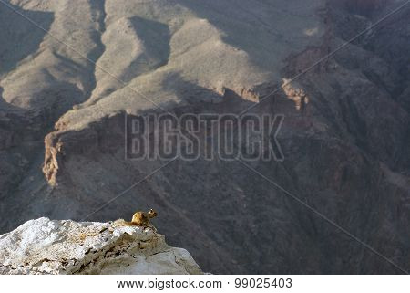 Desert Squirrel Perched Near Edge of Grand Canyon
