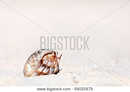 Hermit crab on white sand beach with copy space great for ad