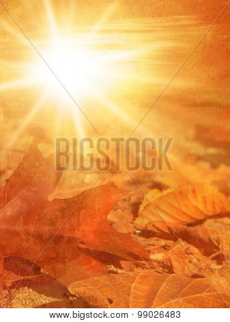 Autumn forest floor with fall leaves at sunset in soft vintage style