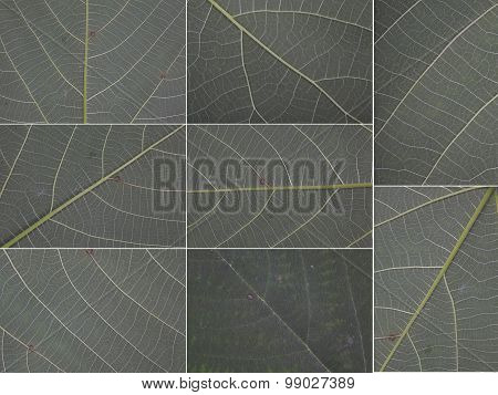 Original Size Of The Collected Leaves Macro Texture Background Isolated On White Background