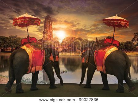 Elephant Dressing With Thai Kingdom Tradition Accessories